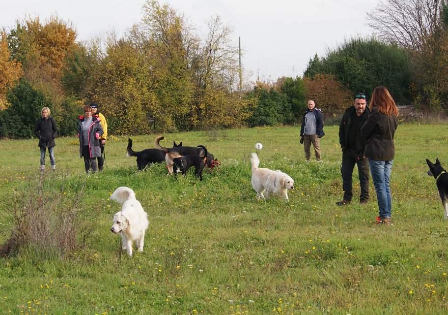 gruppo di cani in classe di comunicazione