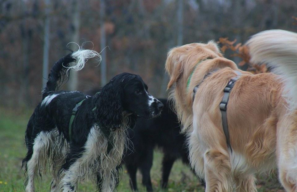 area cani dinamiche sociali