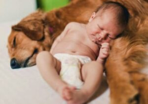 cane e bebè dormono insieme