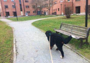 Thor in passeggiata con longhina