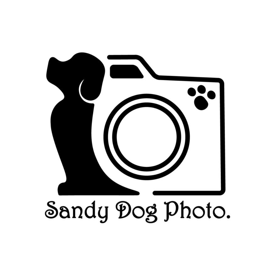 Max Vasselli - Sandy Dog Photo